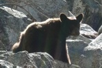 The bear we met on the Mist Falls trail